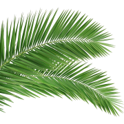 Palm Leaf - Plants -