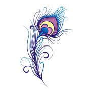 Peacock Feather Digital Clipart Vector - Illustrations -