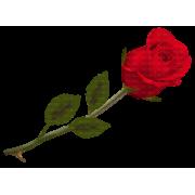 Red rose - Rastline -