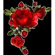 Red Rose Corner - Plants -