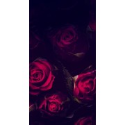 Red Roses  - Background -