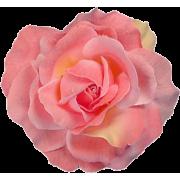 Rose Plants Pink - Plants -