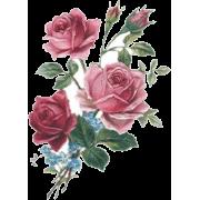 Roses Bouquet - Plantas -