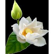 asia12 (flowers) - Plantas -