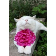 cats and flowers - Background -