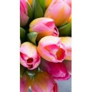 cvijece - 北京 -