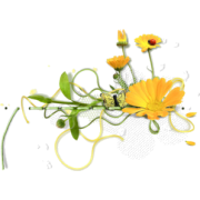 Cvijet Plants Yellow - Plants -