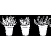 drawn cactus plants - Plantas -