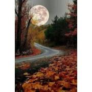dusk in the autumn forest - Priroda -