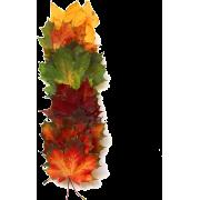 fall leaves - Plants -