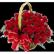 Flower Plants Red - Biljke -