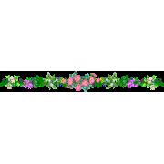 Flower Plants Colorful - Biljke -
