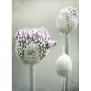 flowers - Mie foto -
