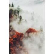 forest in the mist - Priroda -