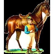 horse - Zwierzęta -