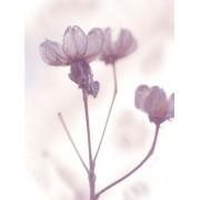 lavender flowers - Mie foto -