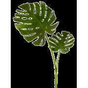 leaf - Plantas -