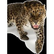 leopard - Animales -