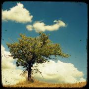 summer day - Background -