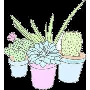 pastel drawn cactus - Plantas -