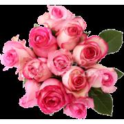 pinkroses - Plants -