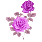 roses - 植物 -