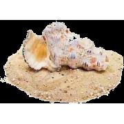 snail on sand - Animals -