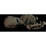 Skeleton - People -