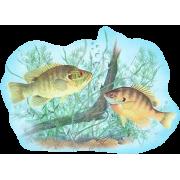 fish - Animali -