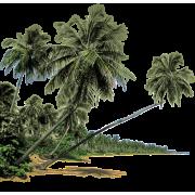 Palm Tree Beach - Natura -