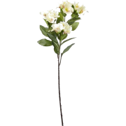 white flowers - Uncategorized -