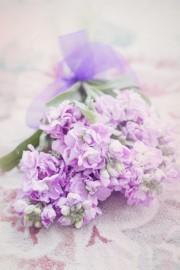 Flowers - My photos -