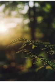 Nature - My photos -