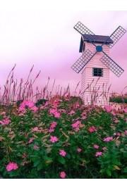 Pink flowers and sky - Moje fotografije -