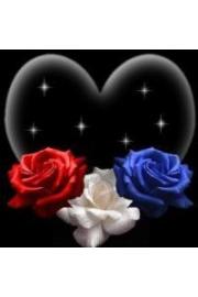 ruže - Mis fotografías -
