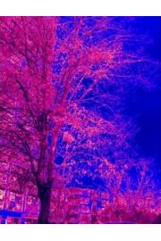 negativ stablo - Mis fotografías -