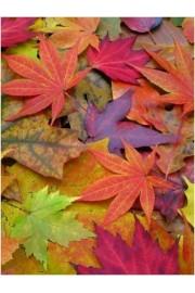 fall leaves - My photos -