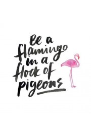 flamingo - Mie foto -