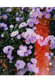 flowers - Meine Fotos -