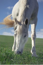 horse - My photos -