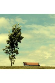 Bench in Beautiful Pictures Fo - 相册 -