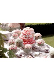 Wedding Party - Minhas fotos -