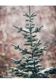 winter - Meine Fotos -