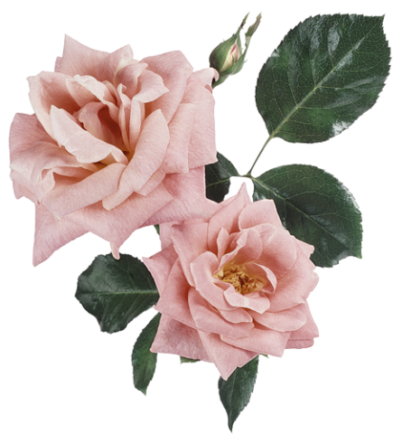 Flower Plants Pink