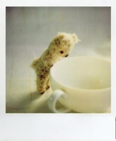 Polaroid Pictures
