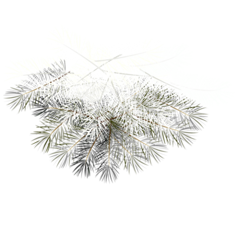 Twig Plants White
